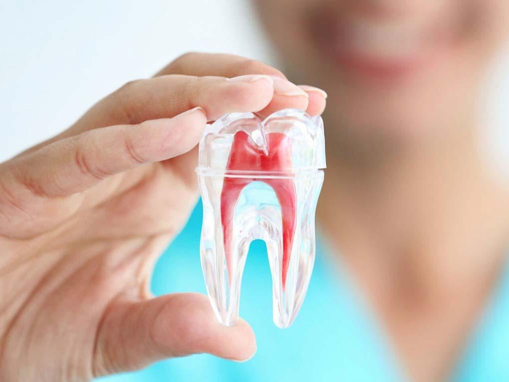 Dentista mostrando maqueta de un diente